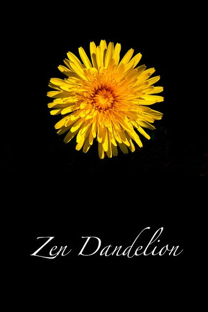 Zen Dandelion by Jim Dollar Photography