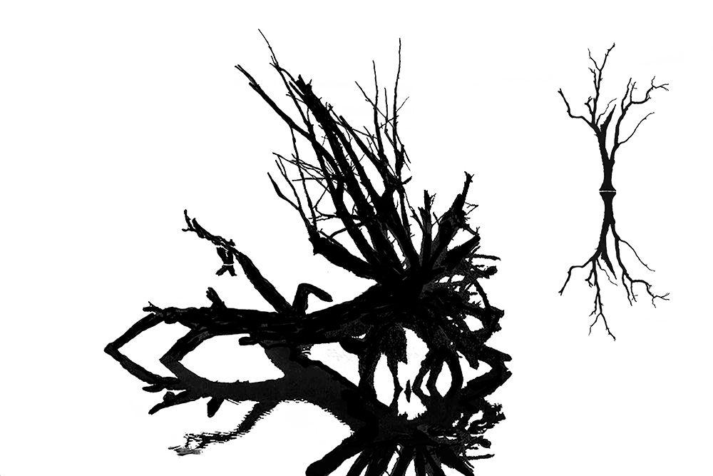 The Ghost Trees of Boneyard Beach 01/28/2015 04 -- Botany Bay Plantation Heritage Preserve/Wildlife Management Area, Edisto Island, South Carolina, January 28, 2015